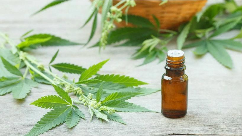 Resultado de imagen para cannabis medicinal tucumán