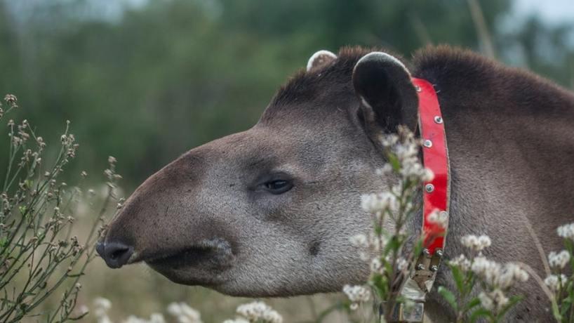 Con una feria ambiental celebran el día del tapir - Tucumán - el ...